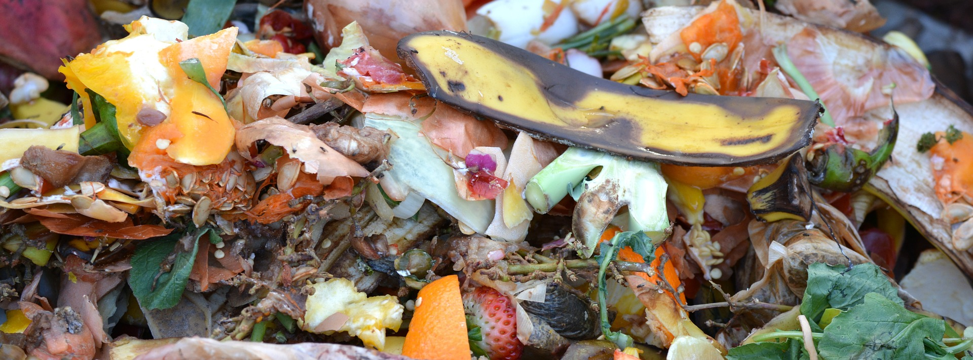 Food Waste is just that, waste